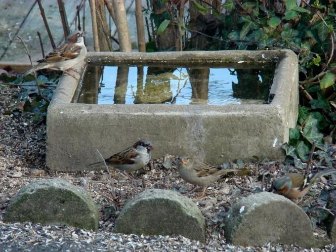 oiseaux de mon jardin 2011 Dsc05710