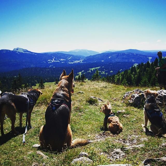 Balades canines: Pays de Gex/Jura/Genève ou Albertville (73) - Page 4 Img_2015