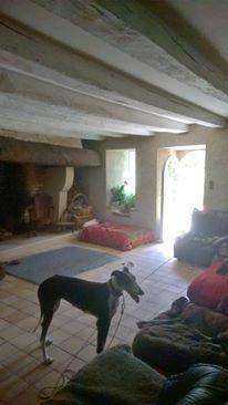 Careta grande galga noire et blanche, bientôt 6 ans.Scooby France  Adoptée  - Page 3 13599610