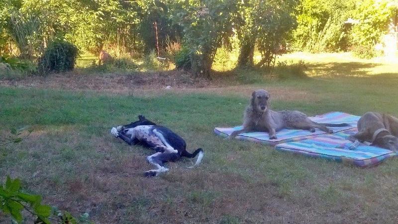 Careta grande galga noire et blanche, bientôt 6 ans.Scooby France  Adoptée  - Page 4 13883710