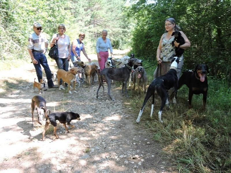 Careta grande galga noire et blanche, bientôt 6 ans.Scooby France  Adoptée  - Page 4 Dscn4712