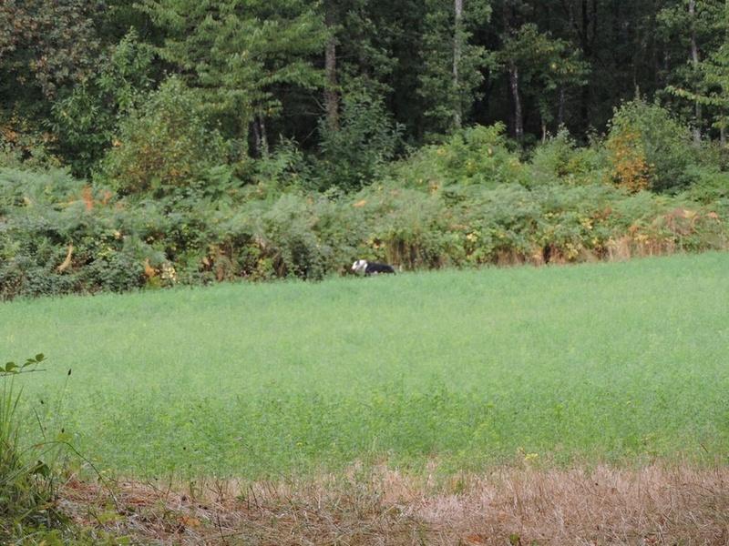 Careta grande galga noire et blanche, bientôt 6 ans.Scooby France  Adoptée  - Page 5 Dscn4912