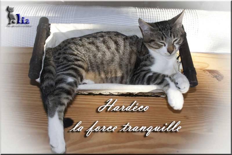 Hardeco, jeune chat mâle tigré et blanc _mg_5110