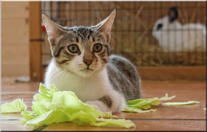 Hardeco, jeune chat mâle tigré et blanc _mg_5112
