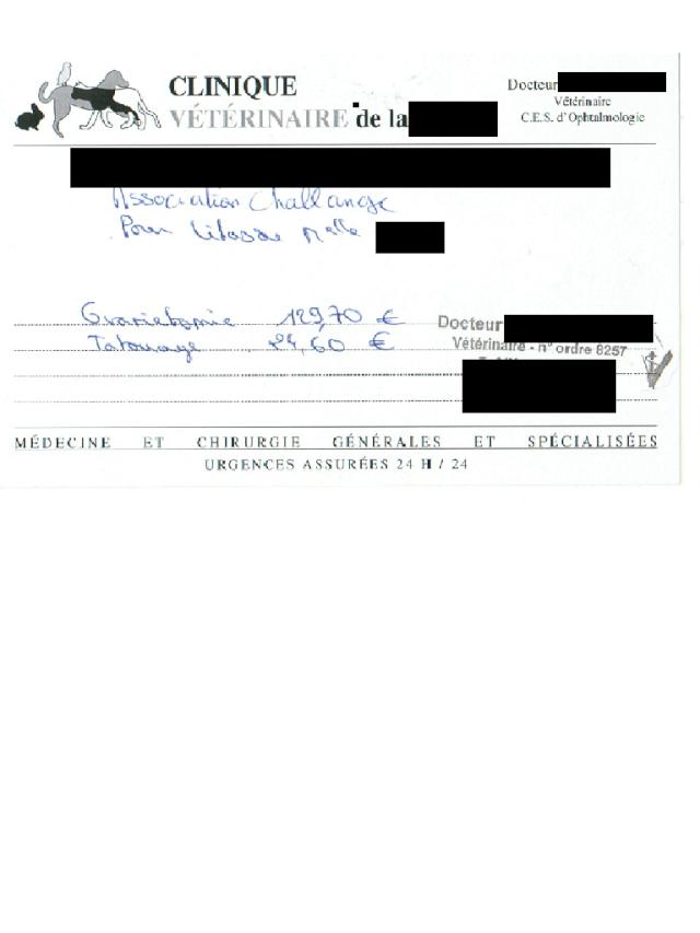 Lilas, x labrador de 9/10mois trouvé sur l'autoroute Lilasd10