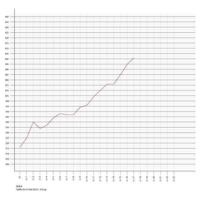 Porlamarkens Mulle murbruk / IKR Rhea Courbe12