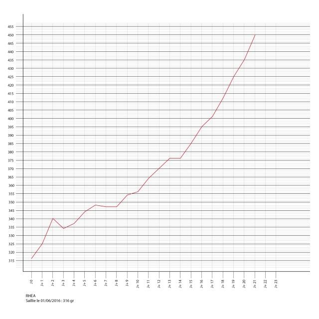Porlamarkens Mulle murbruk / IKR Rhea Courbe15