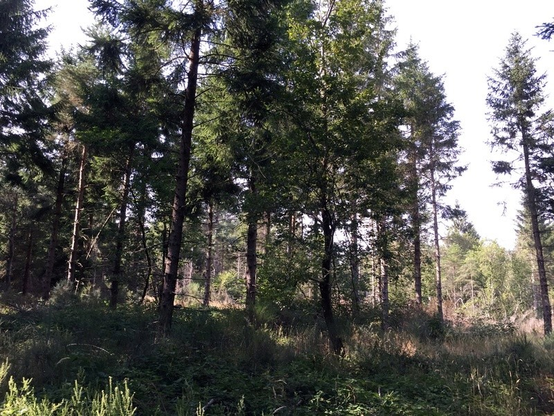 Énigme: La pierre à cupule haut-lieu vibratoire de la montagne noire La_pie11