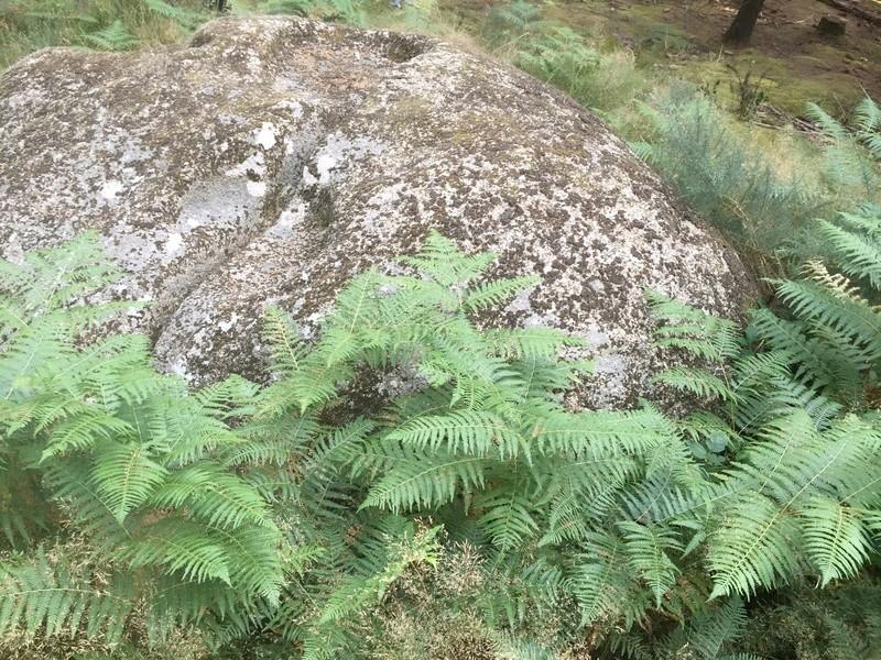 Énigme: La pierre à cupule haut-lieu vibratoire de la montagne noire La_pie12