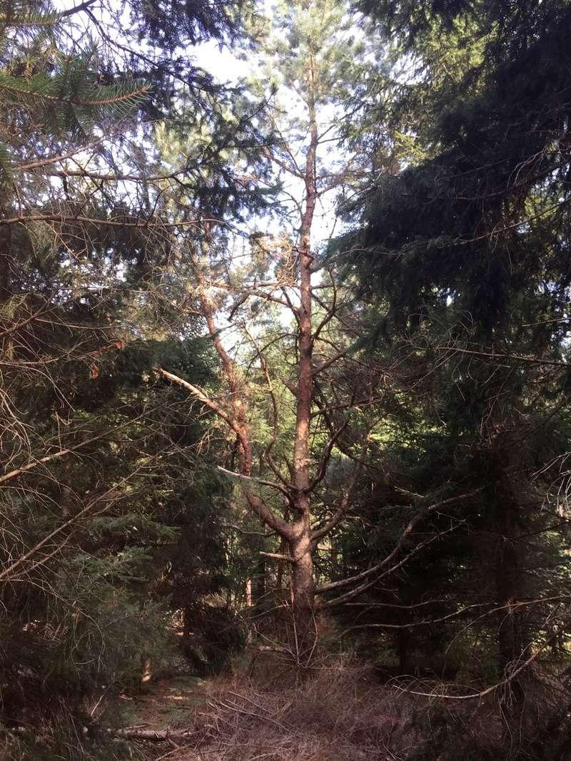 Énigme: La pierre à cupule haut-lieu vibratoire de la montagne noire La_pie15