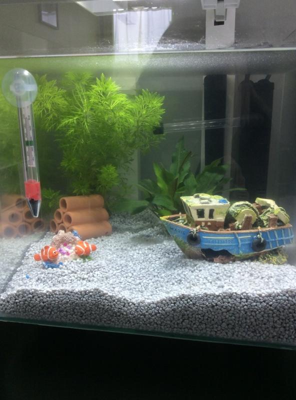 Mon nouvel aquarium, lancement d'une débutante - Page 2 Image10