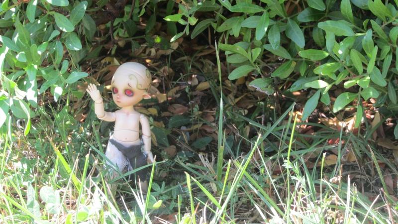 [Obitsu 11cm] Ki, esprit de la forêt Img_1911