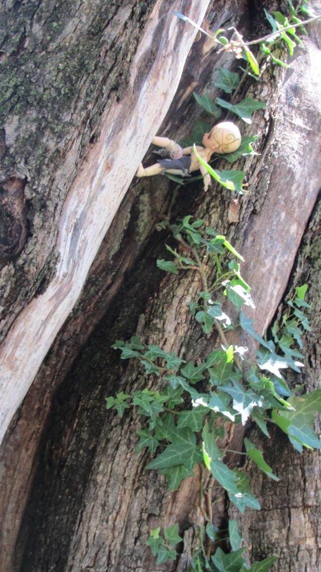 [Obitsu 11cm] Ki, esprit de la forêt Img_1913