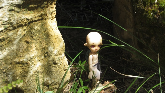 [Obitsu 11cm] Ki, esprit de la forêt Img_1916