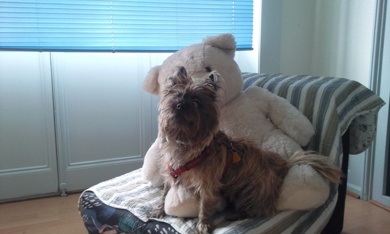 Alinka    cairn terrier - Page 2 Photo111