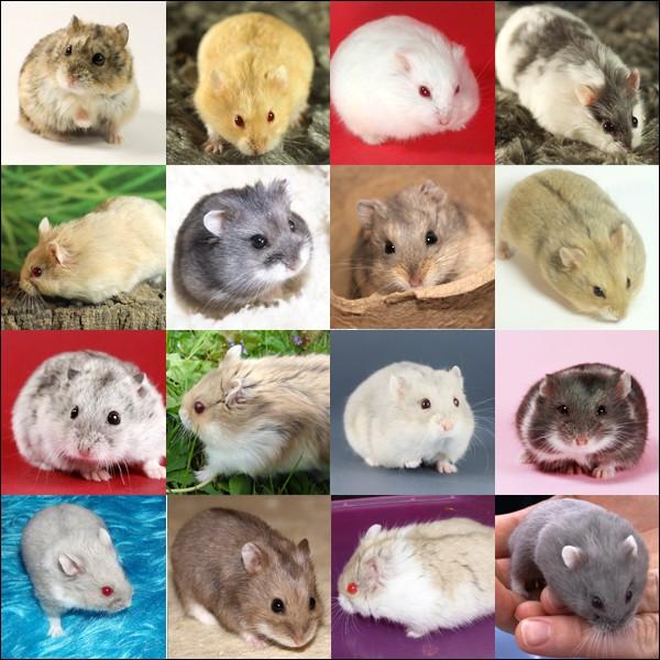 Fiche : les 5 espèces domestiques Campbe10