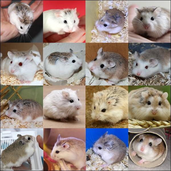 Fiche : les 5 espèces domestiques Robo_s10