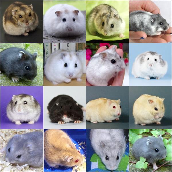 Fiche : les 5 espèces domestiques Russes10