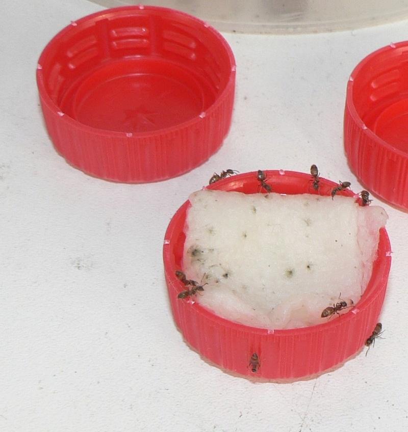 Nourrir les fourmis de l'extérieur  P1220320