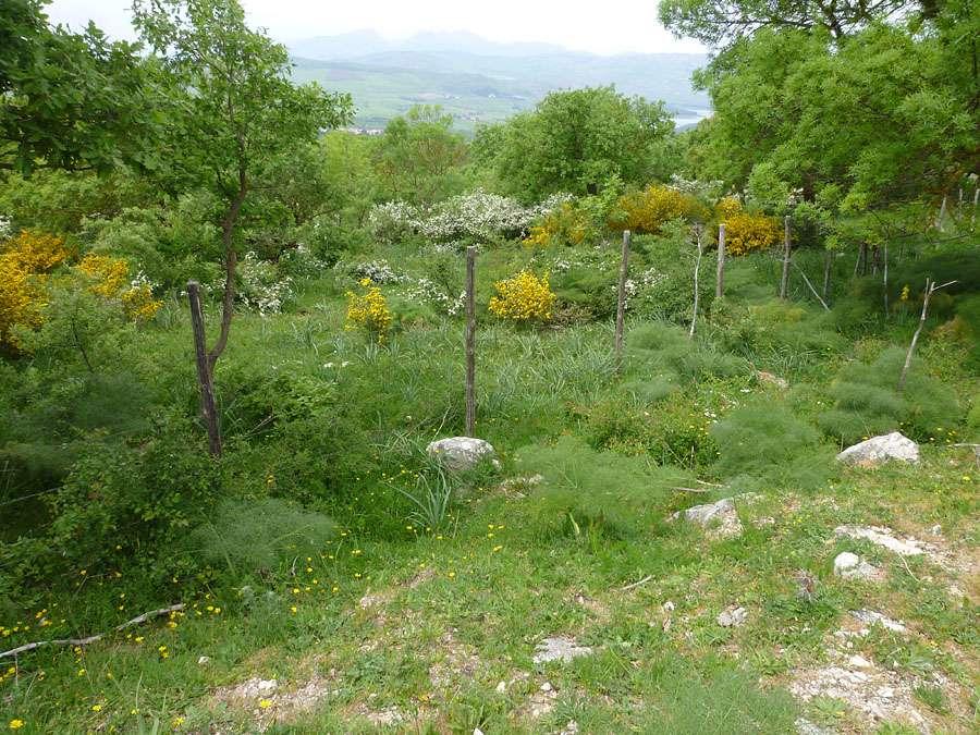 Trésors de Sicile ... P1190311