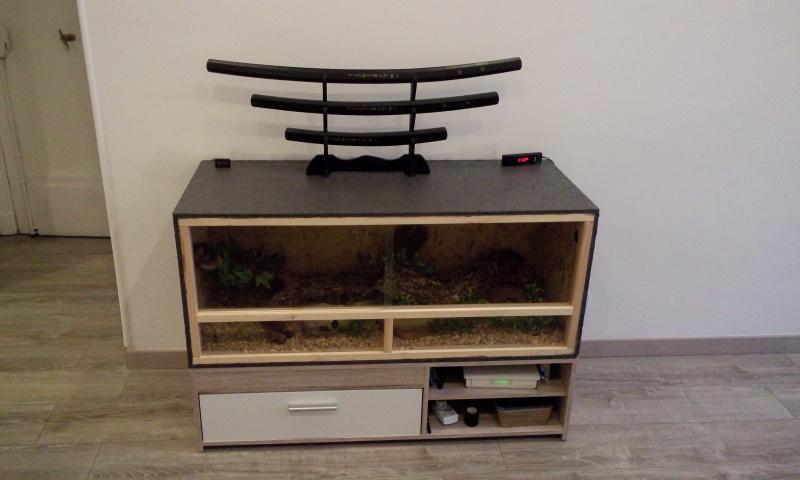 Premier achat terrarium et installation : besoin de vos avis et recommendations P6060910