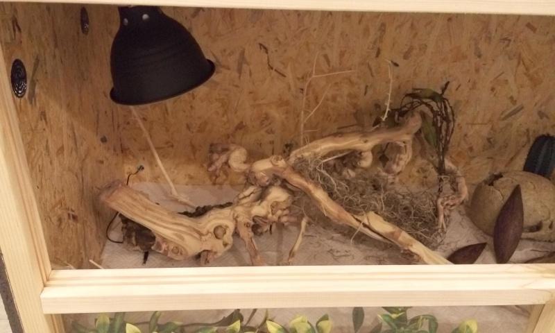 Avis sur terrarium pour Pogona de 2 mois P6062310