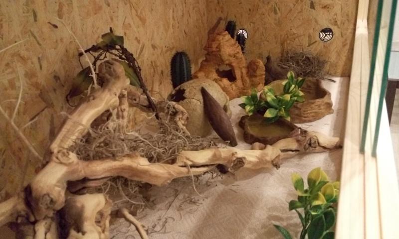 Avis sur terrarium pour Pogona de 2 mois P6062311