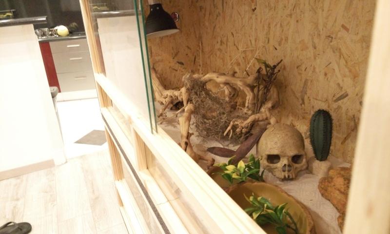 Avis sur terrarium pour Pogona de 2 mois P6062312