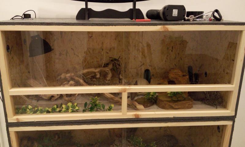 Avis sur terrarium pour Pogona de 2 mois P6062313