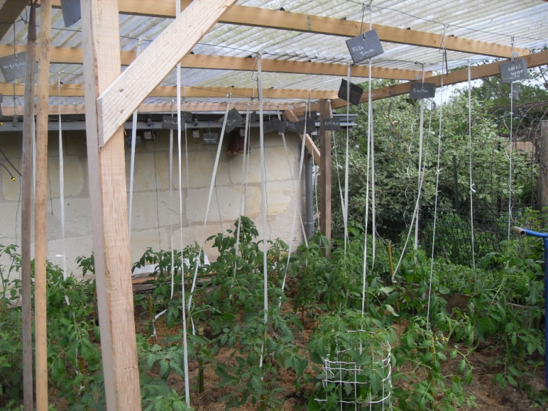 mon toit à tomate en 2014 Sdc16110