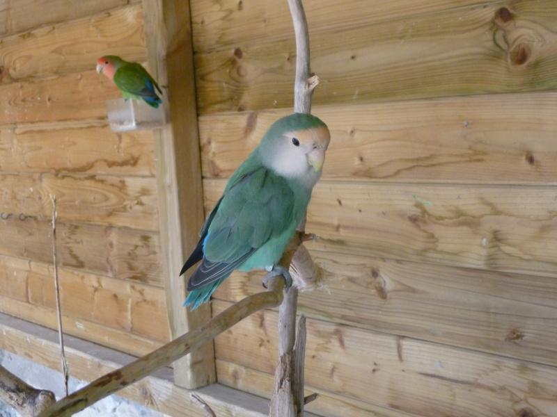 Tame party Oiseau10