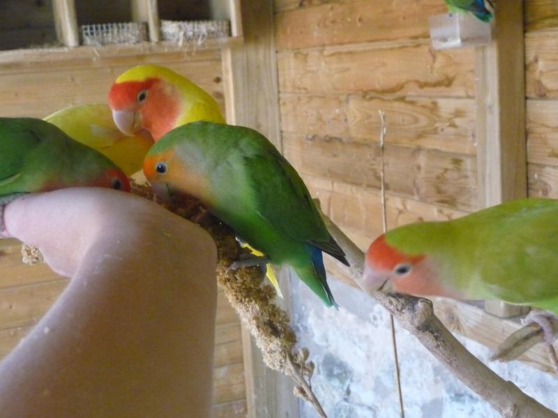 Tame party Oiseau12