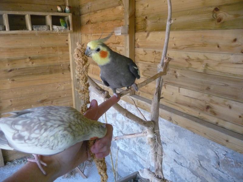 Tame party Oiseau16