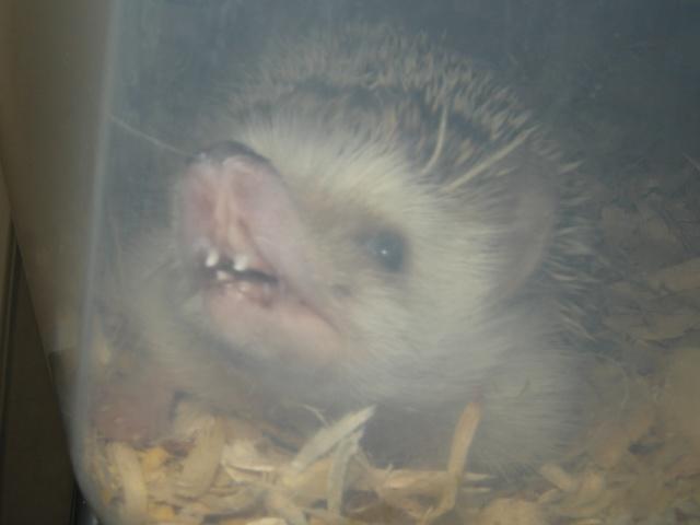 Est-ce que j'ai quelque chose dans les dents??? Rscn2010
