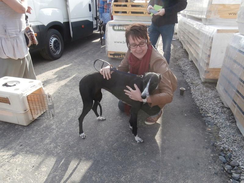 Brunela, fine galga noire et blanche, 2 ans  Scooby France Adoptée  Brunel12