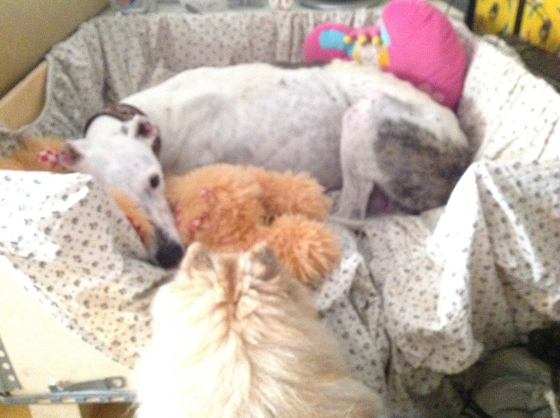 Jacinta 4 ans ,une petite calme et douce Scooby France Adoptée - Page 2 Jacint13