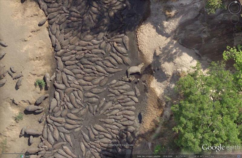 Rhinos dans la rivière Sans_130