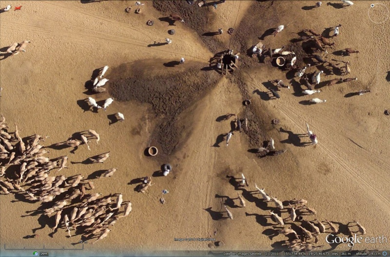Rhinos dans la rivière - Page 2 Sans_131