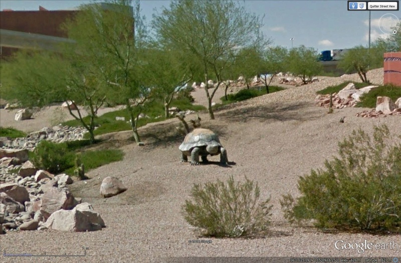 TORTUE, Las Vegas, Nevada - USA Sans_142