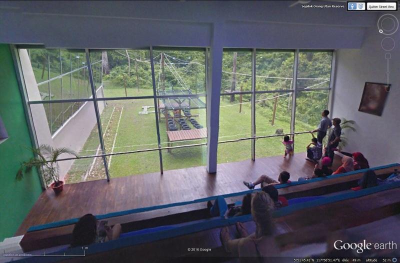 Les orang-outans - Bornéo Sans_t60