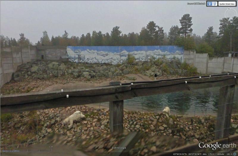[Finlande] - Zoo de Ranua Sans_t67