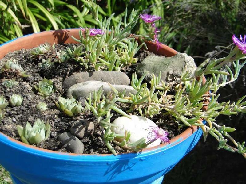 Photos des fleurs Dsc02212