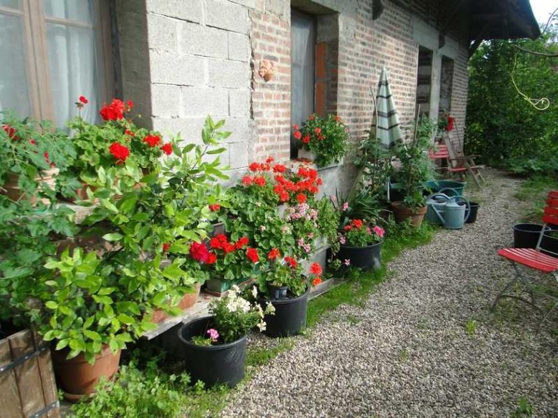 Photos des fleurs Gerani10