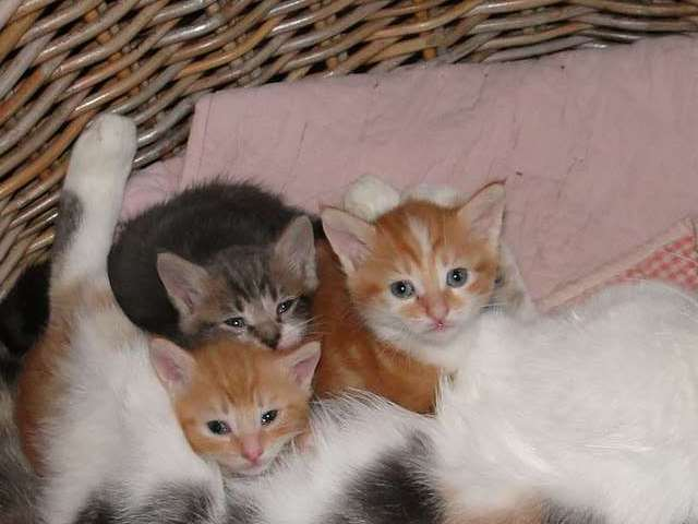Chats, chiens... - Page 9 Petits10