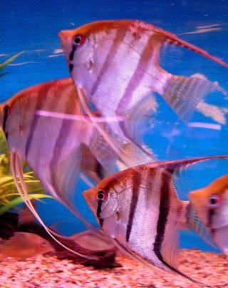 [Magasin] L'aquarium tropical à Montrouge P1070412