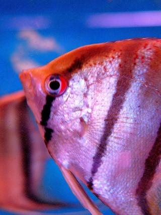 [Magasin] L'aquarium tropical à Montrouge P1070413
