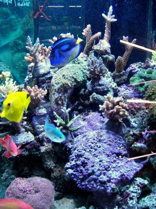 [Magasin] L'aquarium tropical à Montrouge P1070414