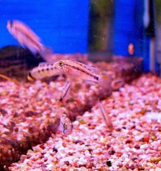[Magasin] L'aquarium tropical à Montrouge P1070415