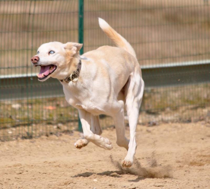 Apparence du chien mâle après castration ? Dsc_0311