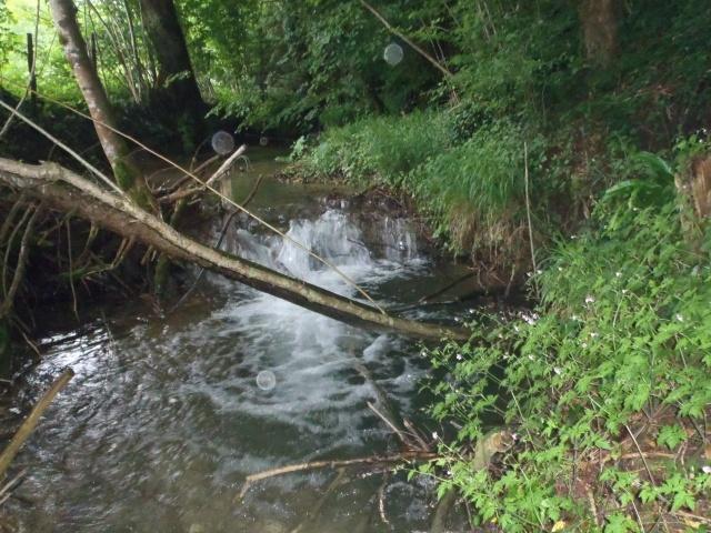 ruisseau - ruisseau en Juin toujours de l'eau P6190011